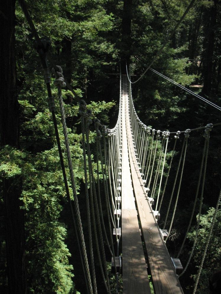 Mt Hermon Canopy Tours